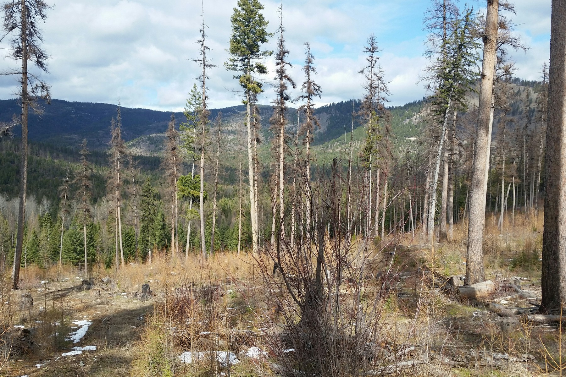 Additional photo for property listing at Blacktail Mountain Private Forest Blacktail Mountain Rd Lakeside, Montana 59922 United States