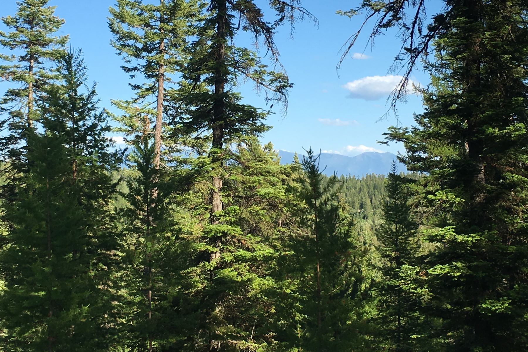 Additional photo for property listing at 211 N Beargrass Cir , Whitefish, MT 59937  Whitefish, Montana 59937 United States