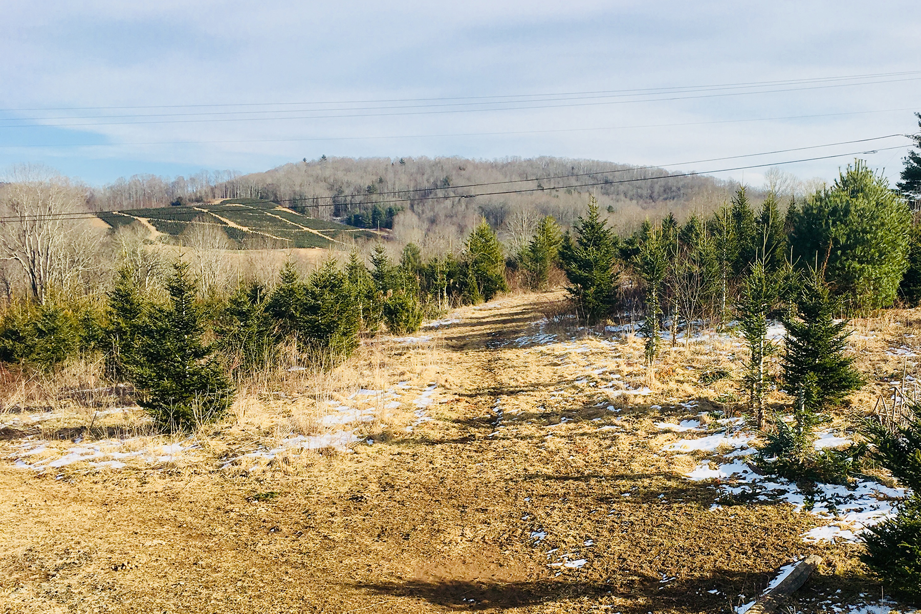 Land for Sale at SPRUCE PINE TBD Dale Rd, Spruce Pine, North Carolina 28777 United States