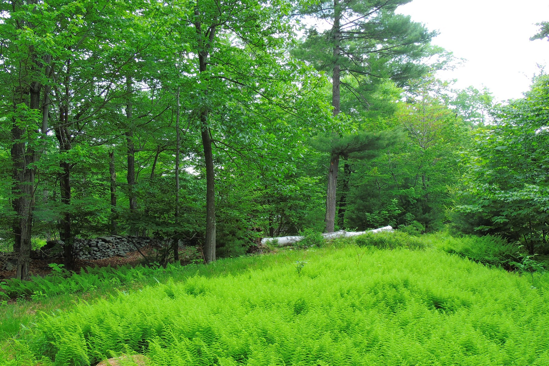 Additional photo for property listing at Cudney Place TBD  Peck Rd Shokan, New York 12481 United States