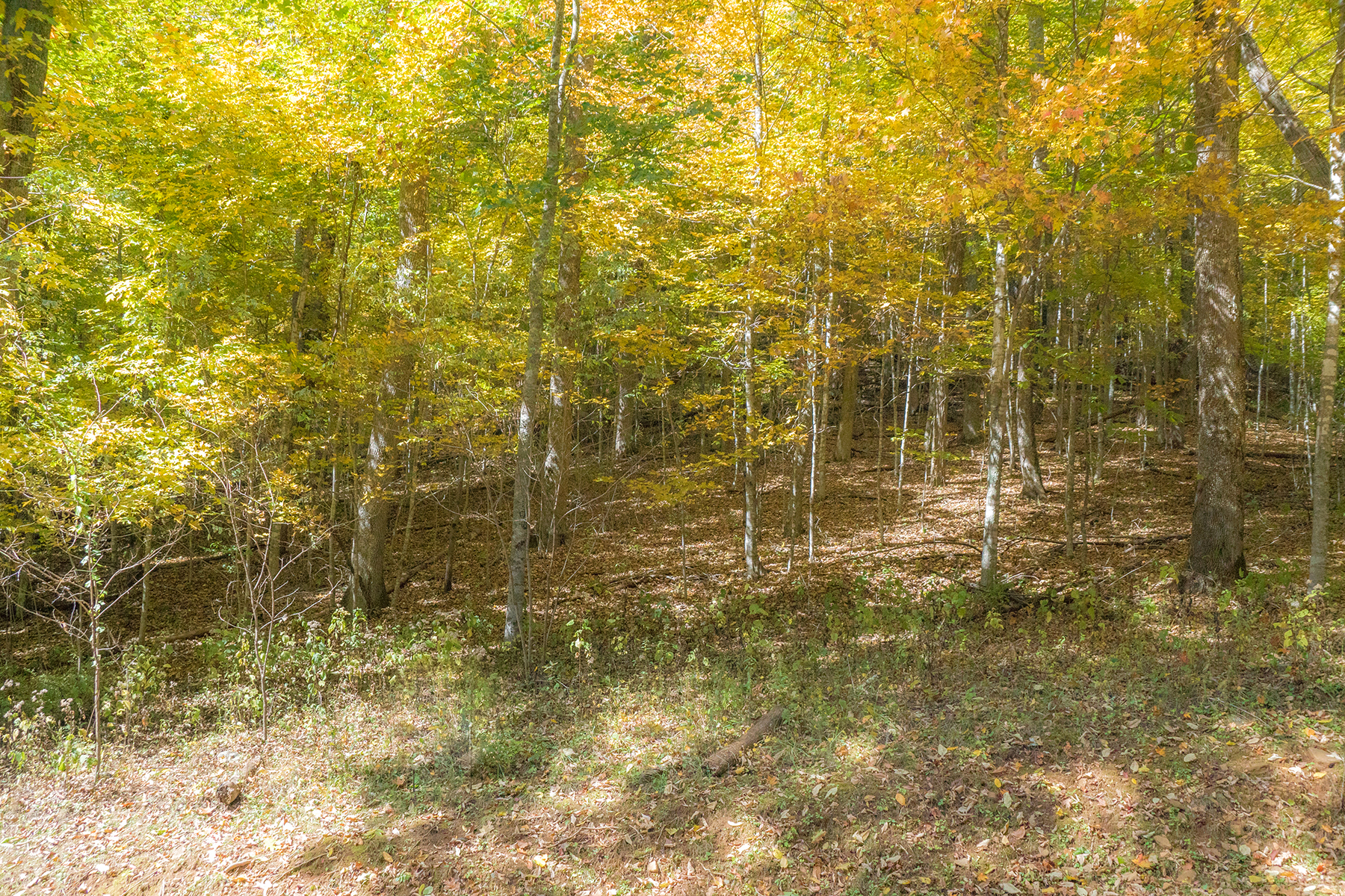 Additional photo for property listing at BOONE - COUNCILL OAKS Lot 67  Fire Pink Rd,  Boone, North Carolina 28607 United States