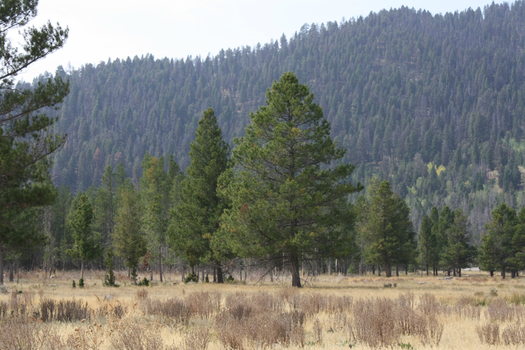 Additional photo for property listing at 4727 MT Hwy 200 4727  Mt Highway 200   W Lincoln, Montana 59639 United States
