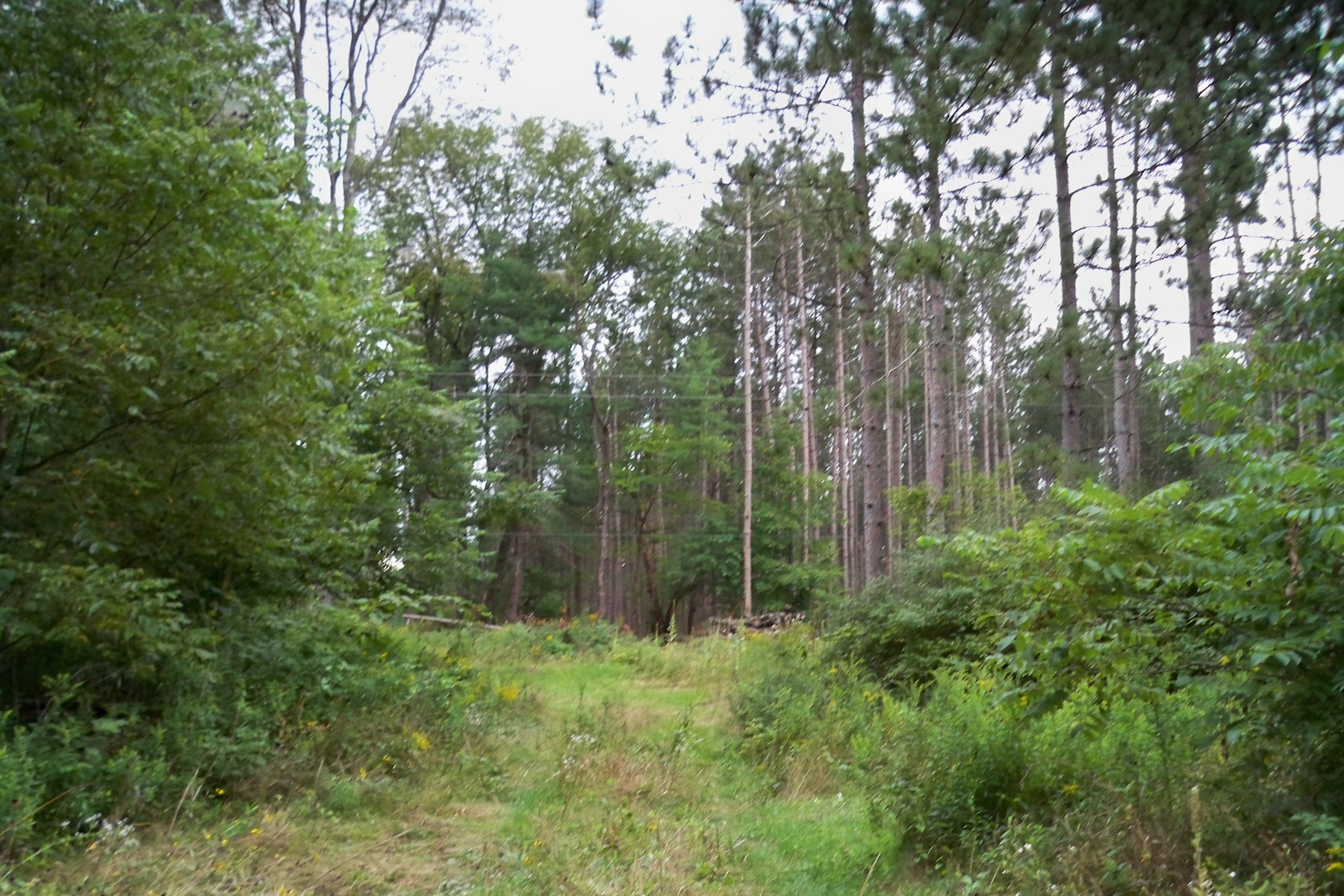 Additional photo for property listing at Squashville Lots 141  Squashville Rd Rd Greenfield, New York 12833 États-Unis
