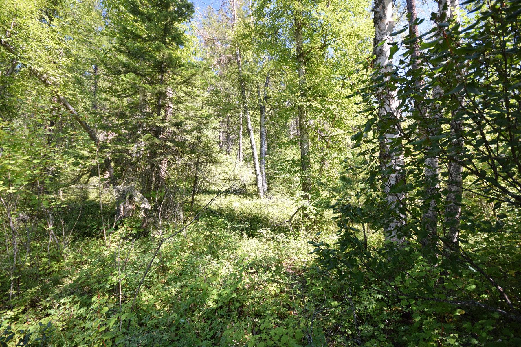 Land for Sale at 682 Latigo Ln , Bigfork, MT 59911 682 Latigo Ln Bigfork, Montana 59911 United States