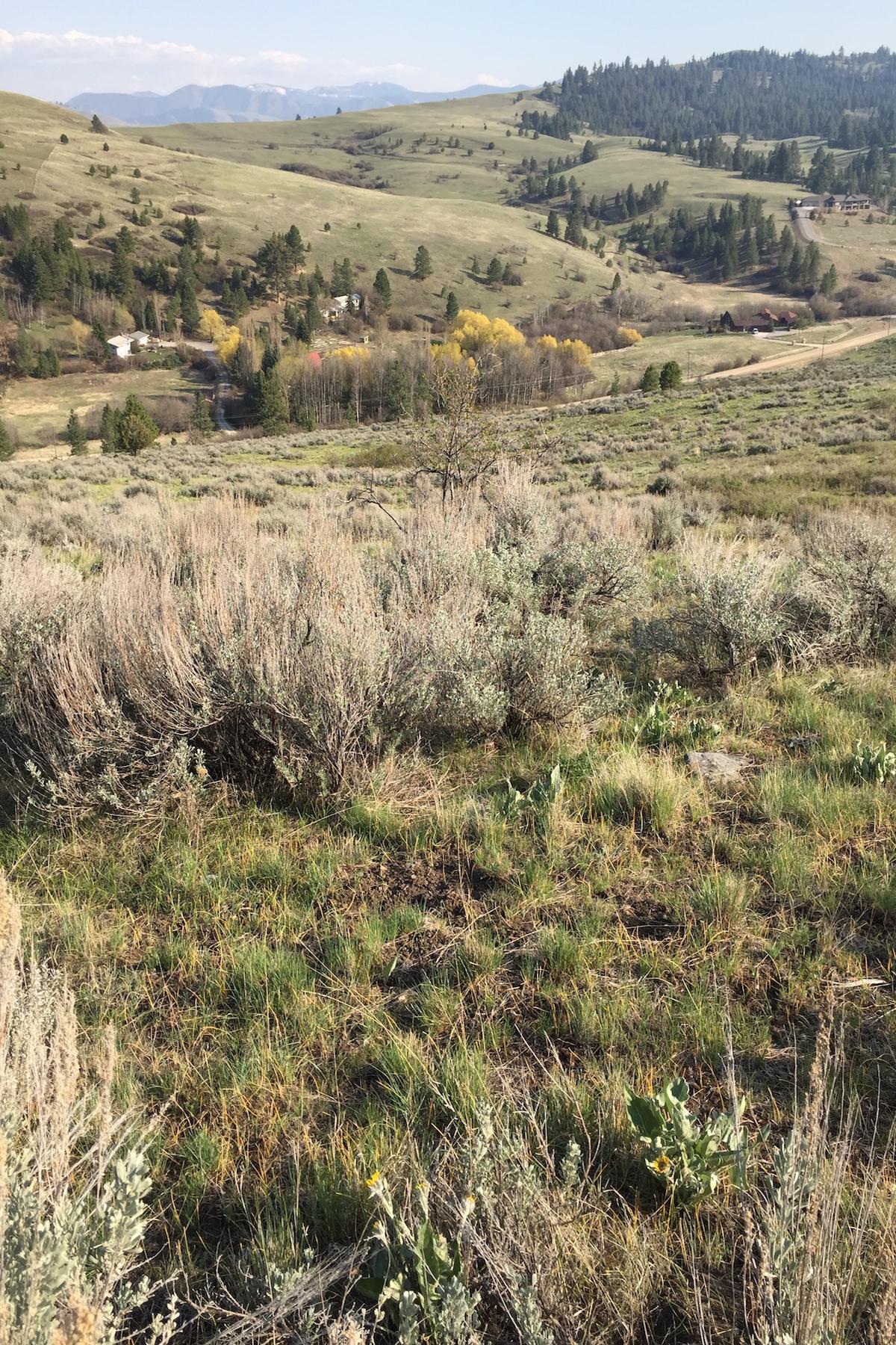 Land for Sale at 0000 Butler Creek , Missoula, MT 59808 0000 Butler Creek Missoula, Montana 59808 United States