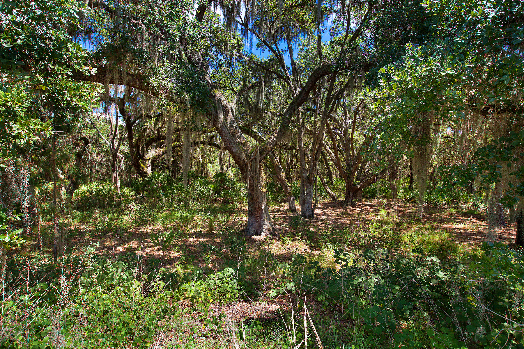Land for Sale at CONCESSION 19431 Beacon Park Pl 9 Lakewood Ranch, Florida, 34202 United States
