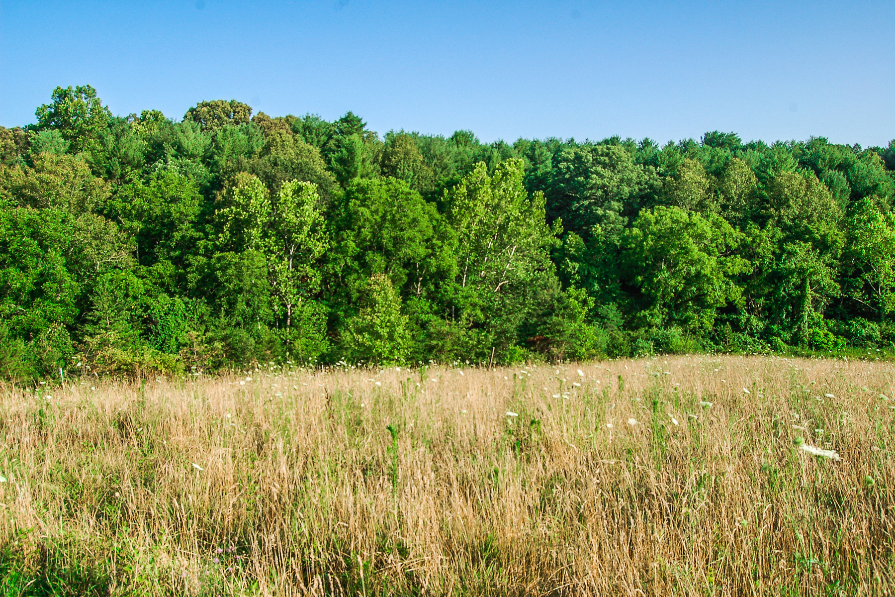 Additional photo for property listing at WEAVERVILLE 10  Silverwood Farm Rd,  Weaverville, North Carolina 28787 United States