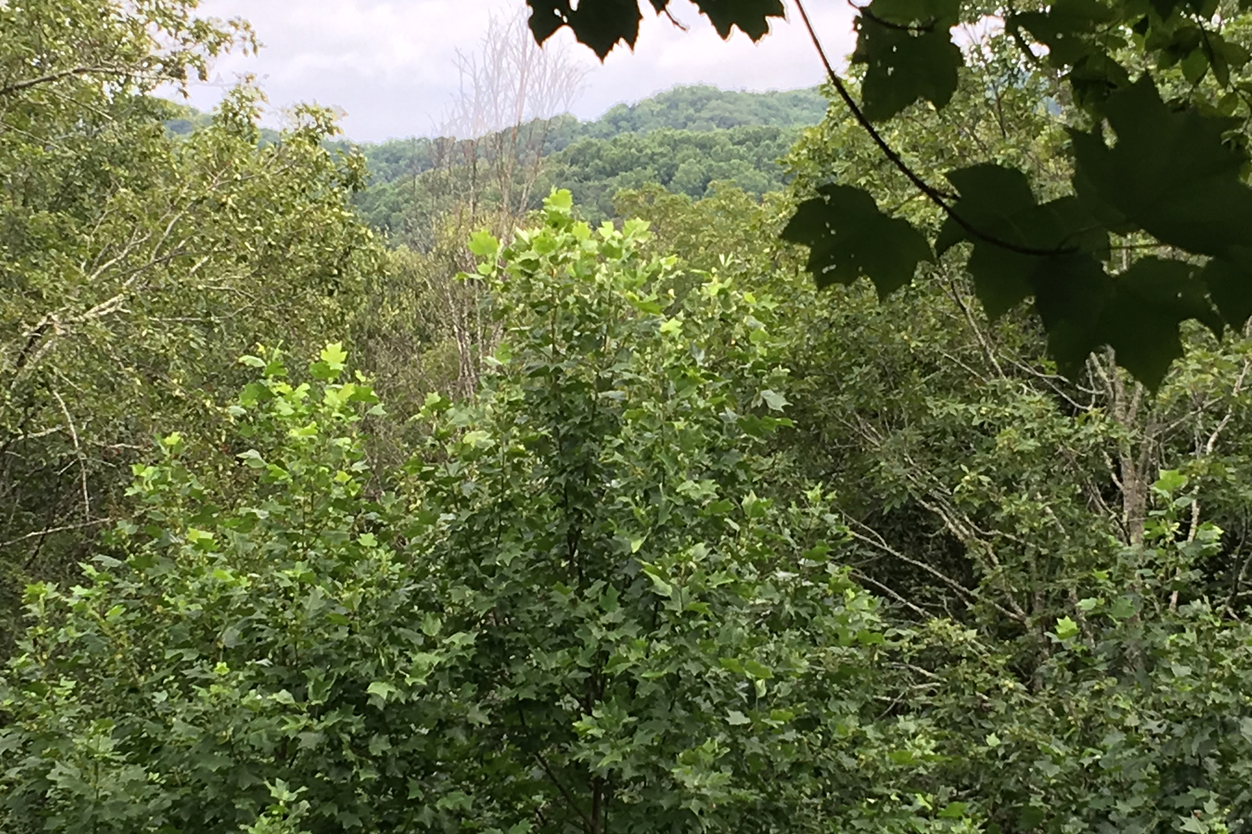 Additional photo for property listing at BOONE - YONAHLOSSEE 219  Upper Fiddlestix,  Boone, North Carolina 28607 United States