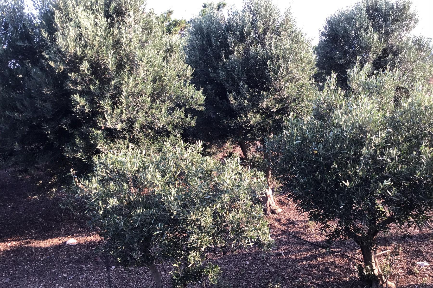 农场 / 牧场 / 种植园 为 销售 在 Farmhouse With Olive Grove Xghajra, Malta 马尔他