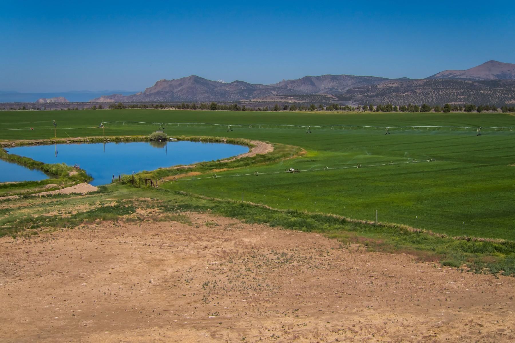 土地 為 出售 在 Powell Butte, 俄勒岡州 97753 美國