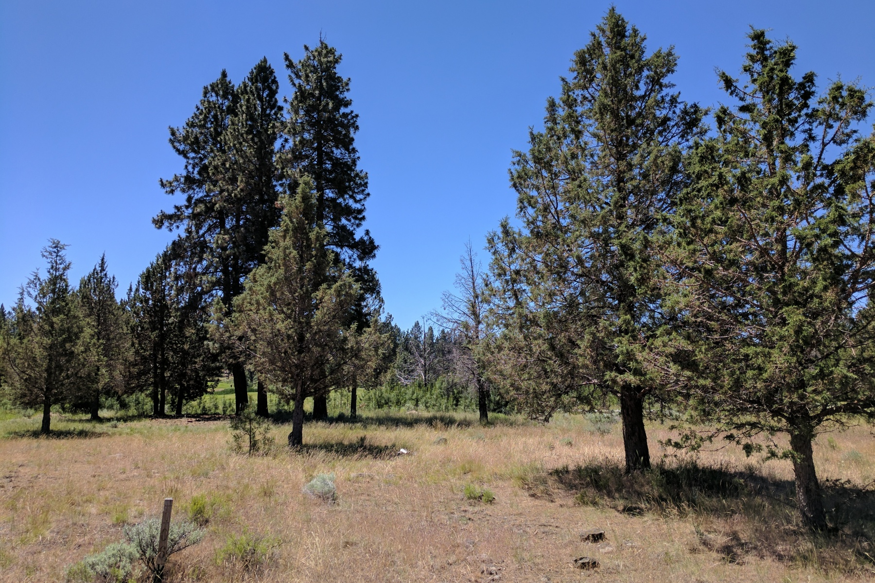 Terreno por un Venta en 17037 Golden Stone Drive Sisters, Oregon, 97759 Estados Unidos