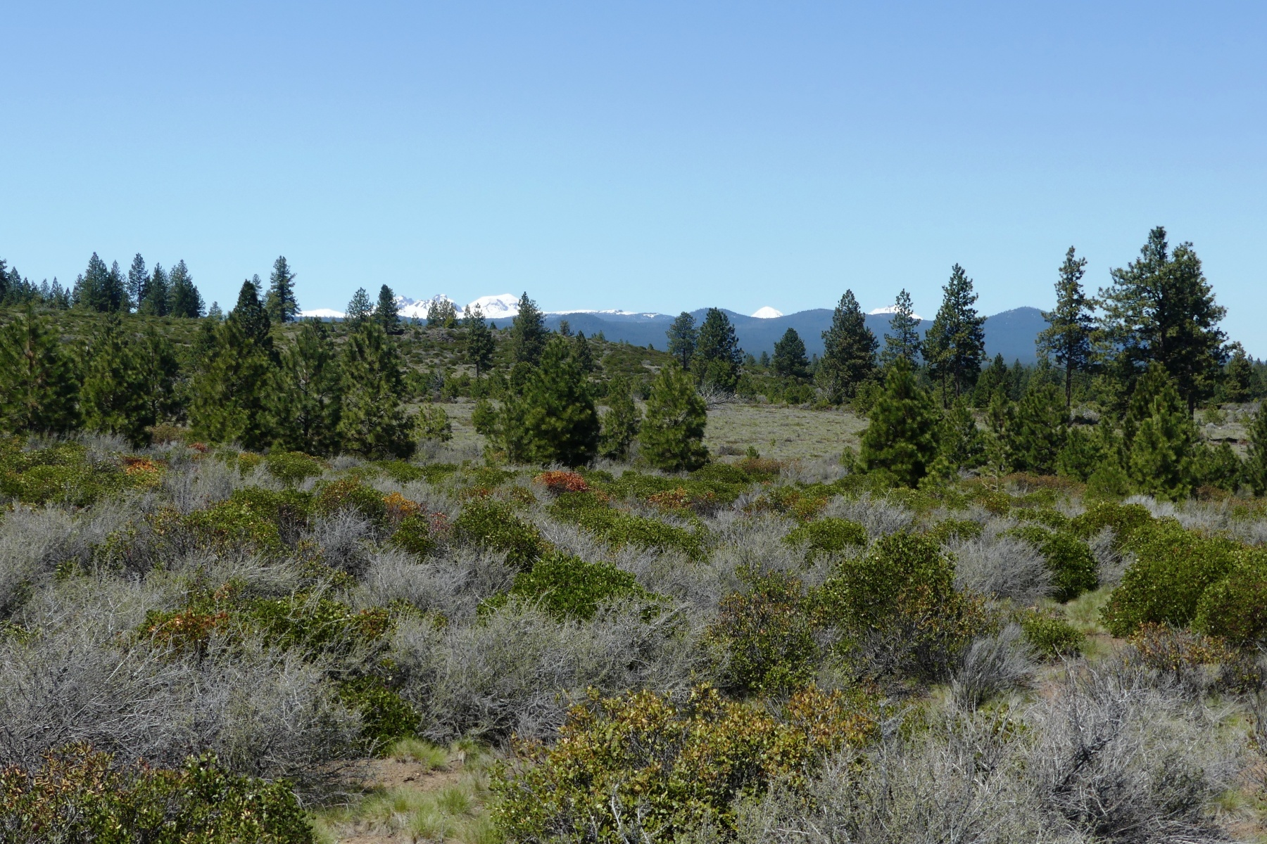 Land for Sale at 61429-Lot 180 Cannon Court Bend, Oregon, 97702 United States