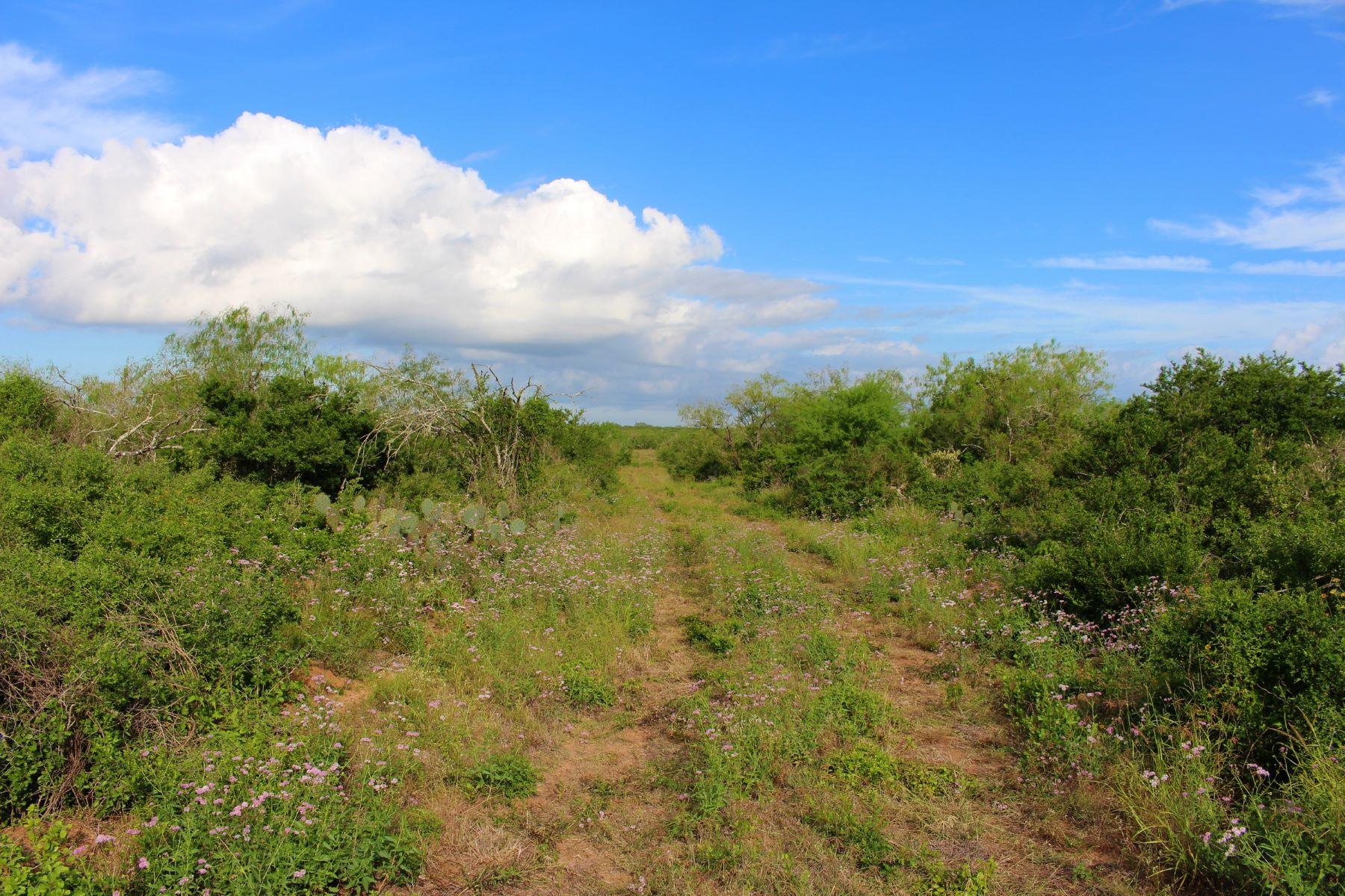 Ферма / ранчо / плантация для того Продажа на 239+/- Acres / Duval County, San Diego , TX 78384 San Diego, Техас, 78384 Соединенные Штаты