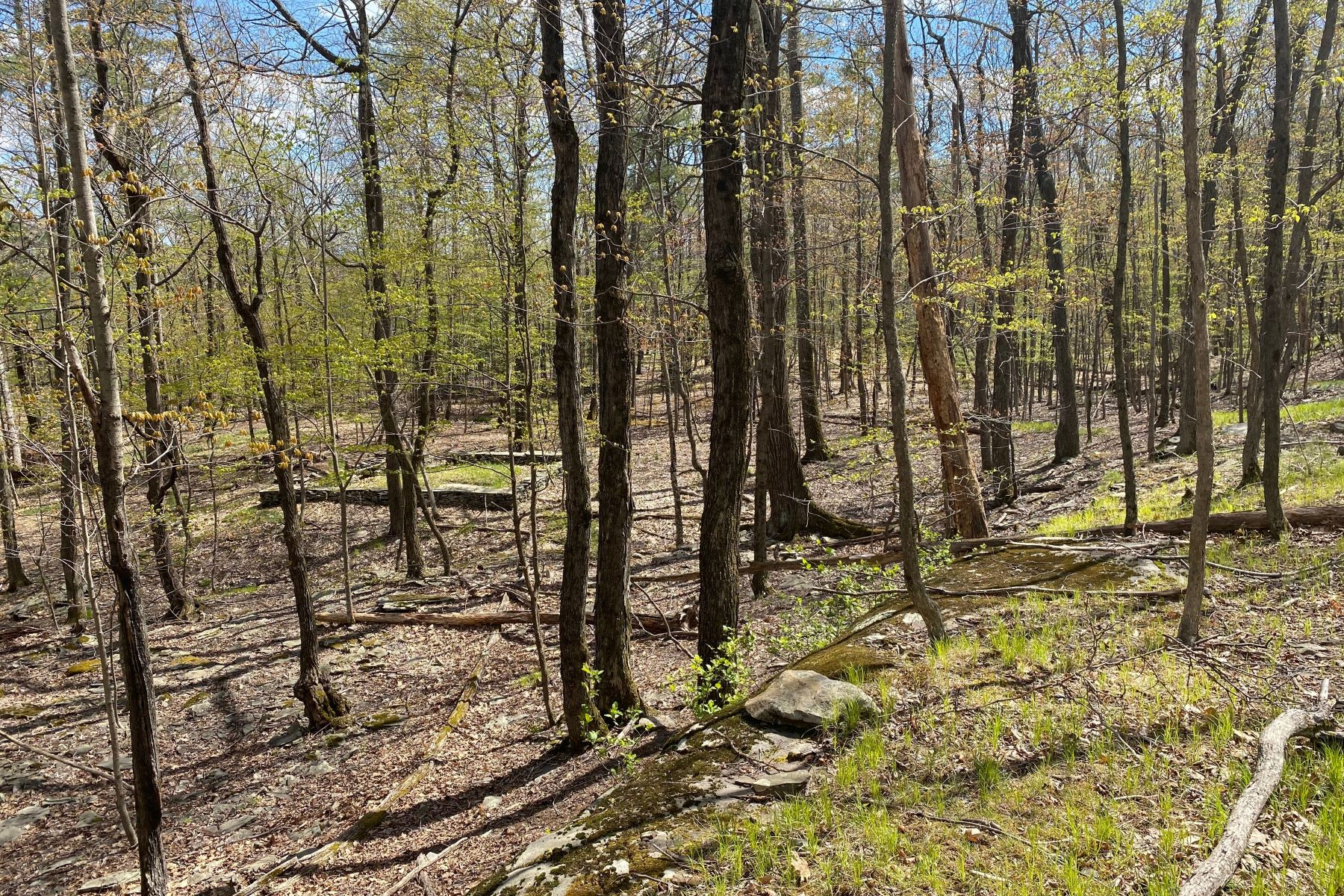 Land for Active at Enchanting Forest Land TBD Lewis Hollow Road Woodstock, New York 12498 United States