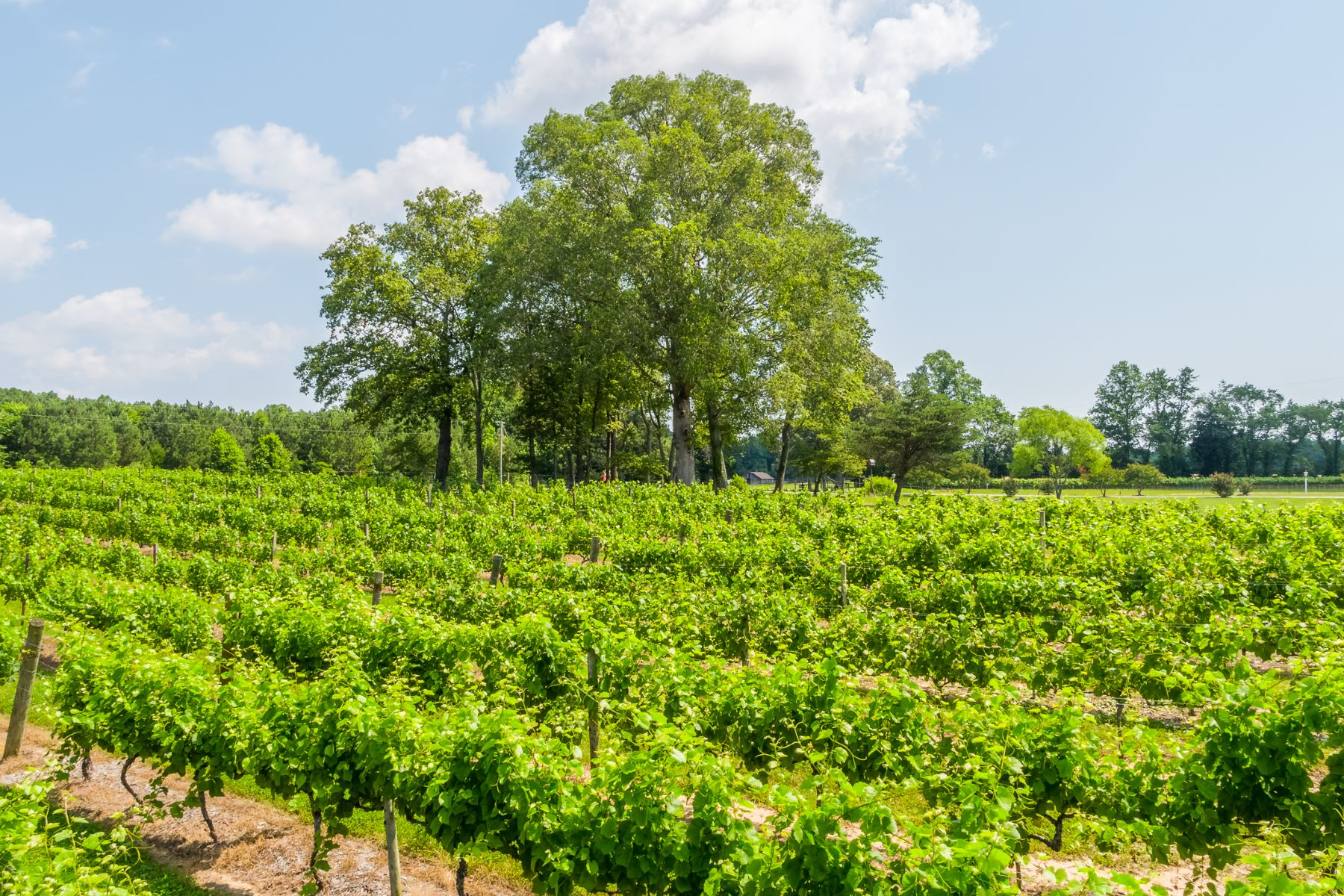 Vineyard Real Estate por un Venta en 1025 Goodluck Road, Kilmarnock, VA 22482 Kilmarnock, Virginia 22482 Estados Unidos