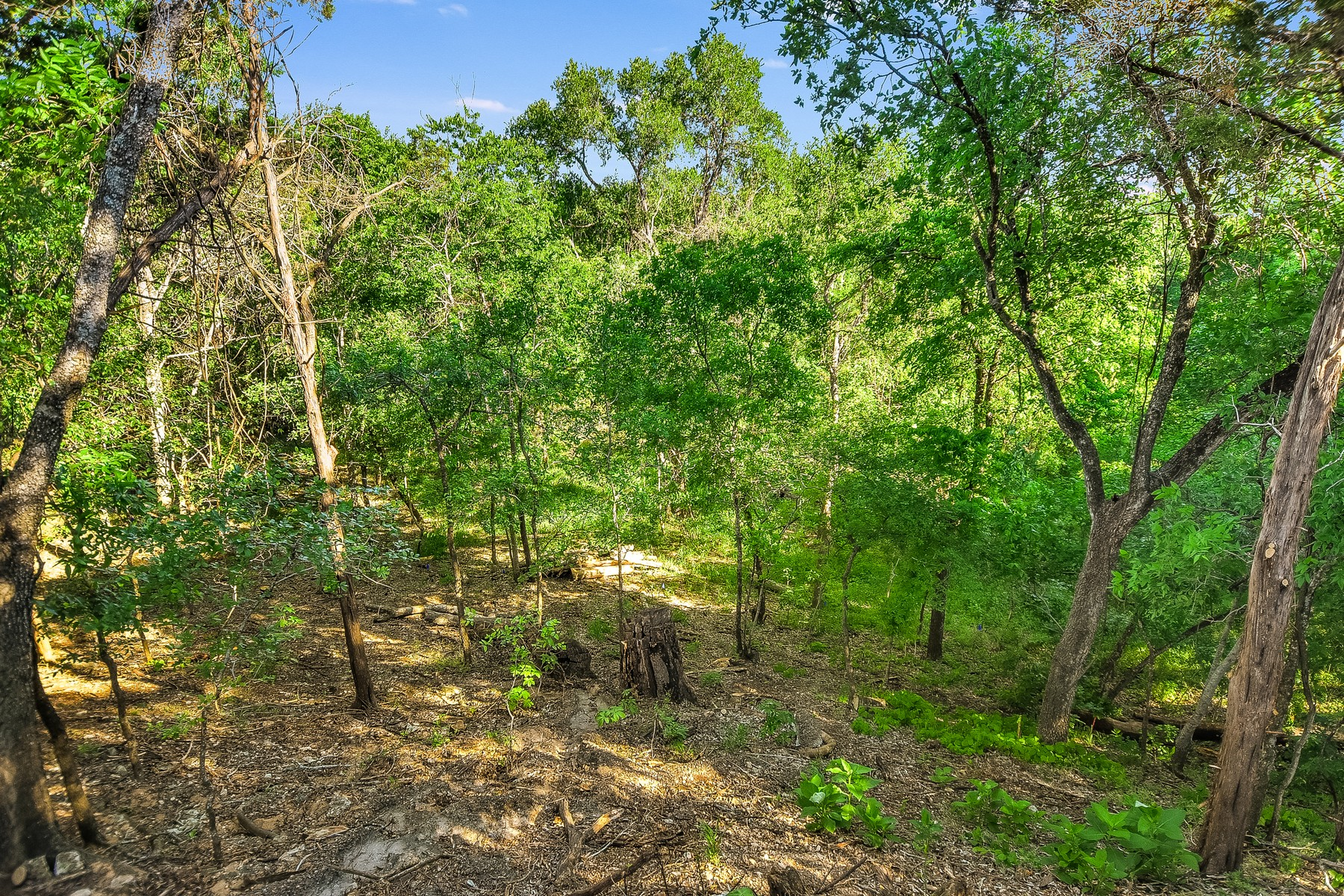 Additional photo for property listing at Rare & Splendid in Onion Creek Harbour Town Cir Austin, Texas 78747 Estados Unidos
