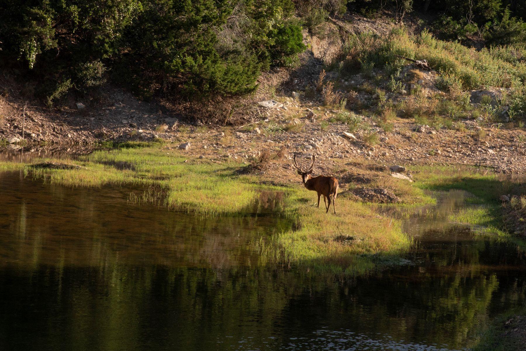 农场 / 牧场 / 种植园 为 销售 在 Pipe Creek Texas Ranch 0 Bumpgate Rd Pipe Creek, 得克萨斯州 78063 美国