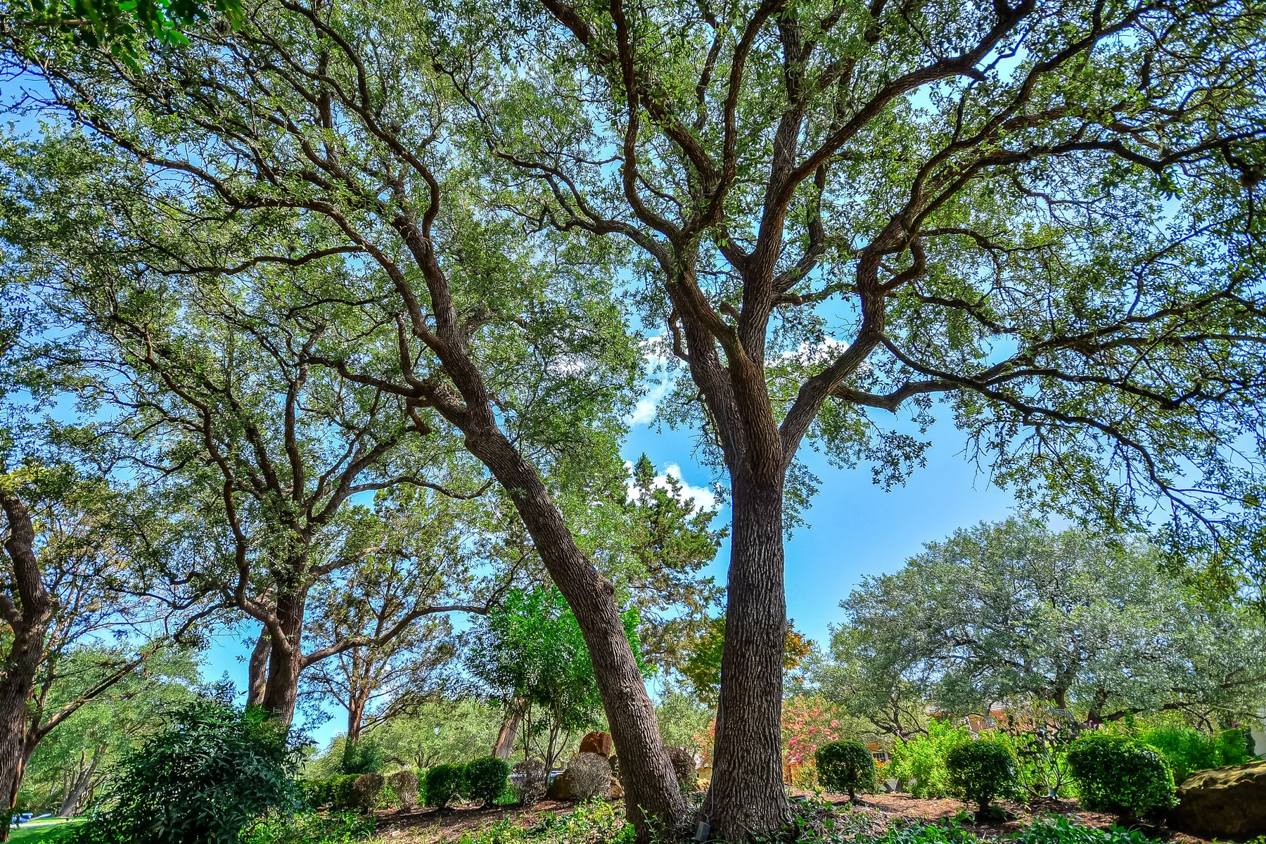 Additional photo for property listing at Outstanding Barton Creek Estate Home 8409 Chalk Knoll Dr Austin, Texas 78735 United States