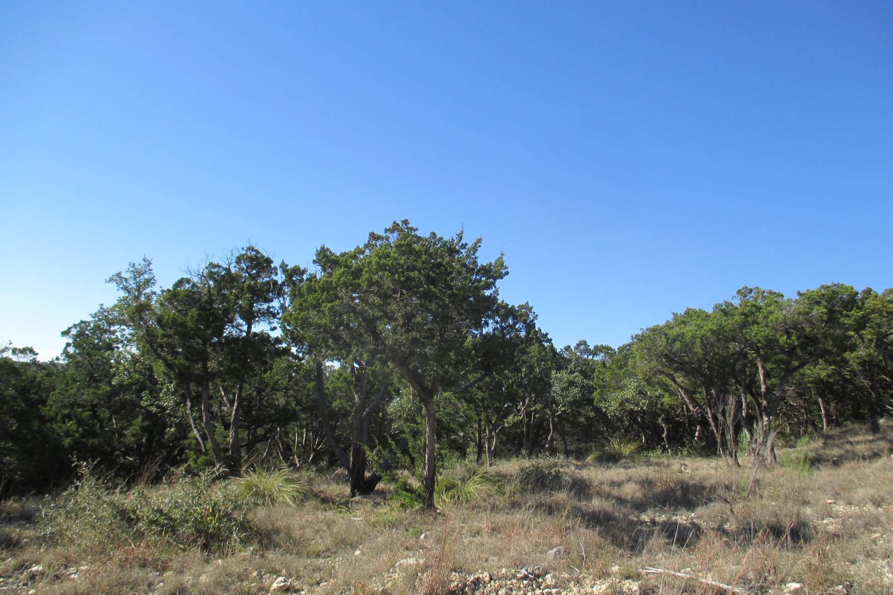 Additional photo for property listing at Great Lot in Estancia 42 Thunder Hill Boerne, Texas 78006 Estados Unidos