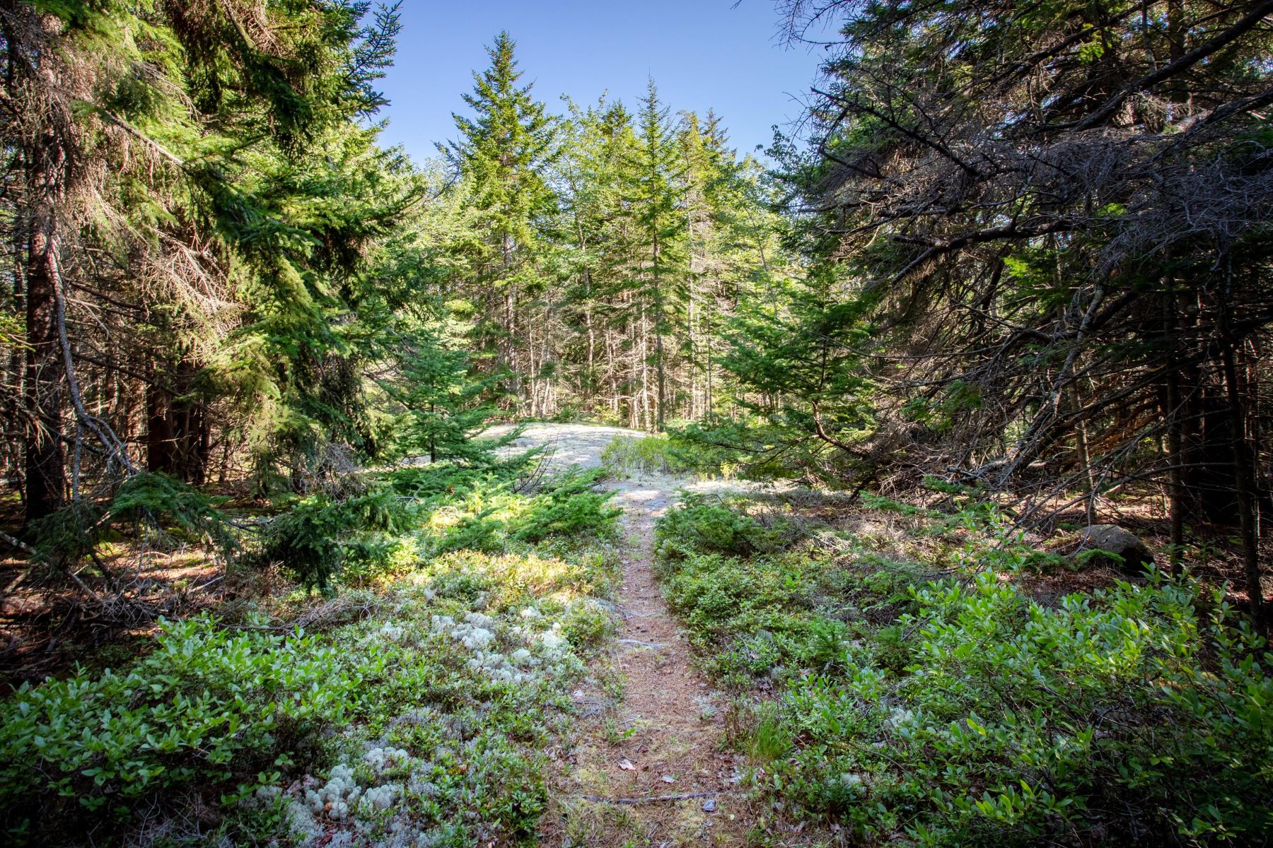 Land for Active at Lot 8 Rock Garden Way Mount Desert, Maine 04675 United States