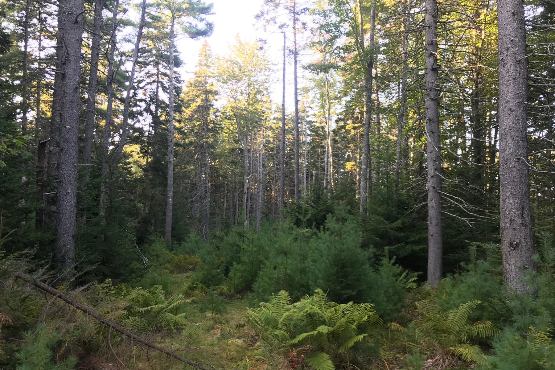 Land for Sale at Spruce Hollow Lane Boothbay Harbor, Maine 04538 United States