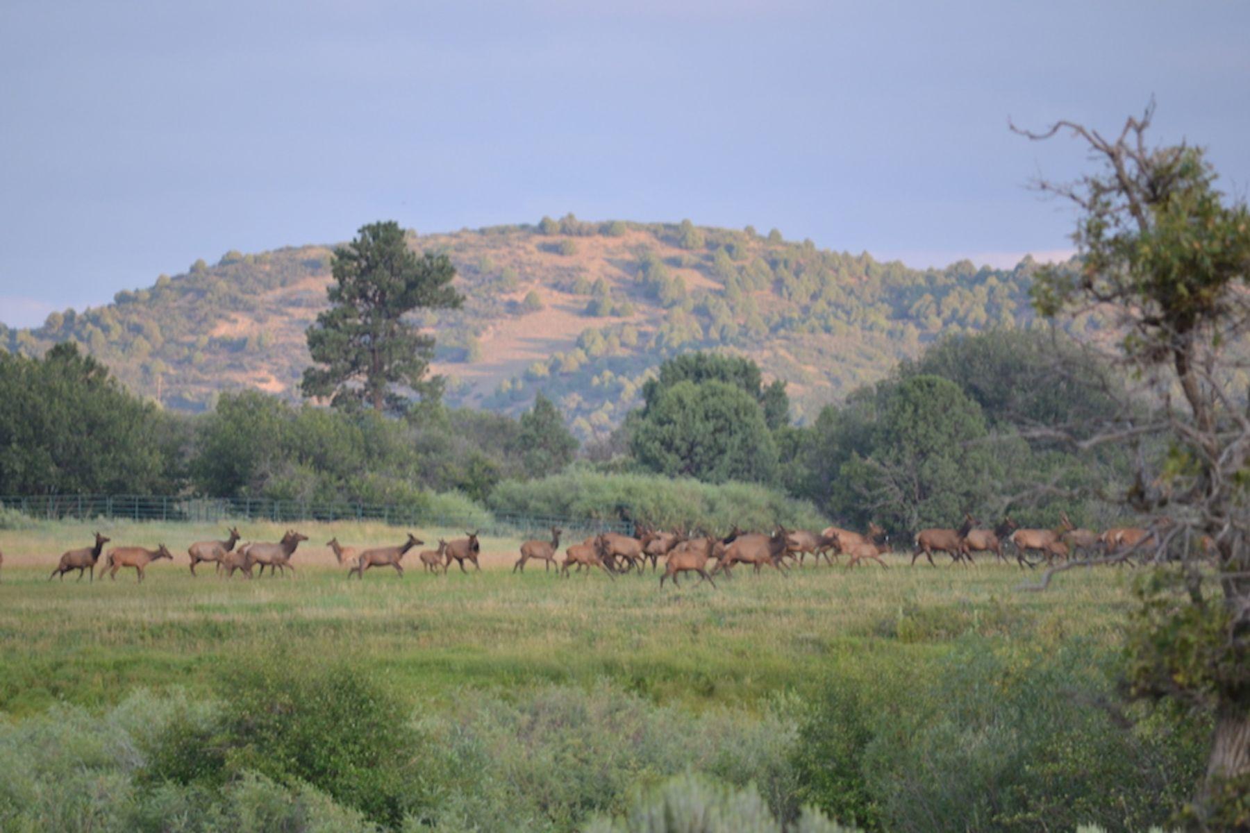 Single Family Homes للـ Sale في Chama, New Mexico 87520 United States