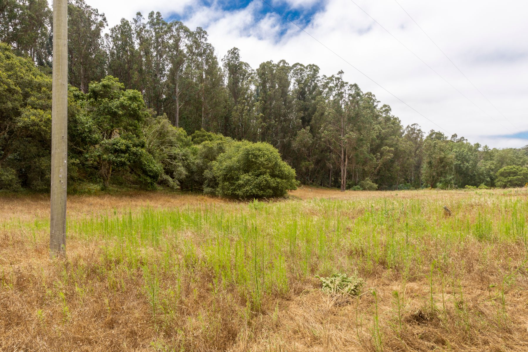 Land for Sale at 51.67 Acres Waiting for Dream Home! 0 Desmond Road Prunedale, California 93907 United States