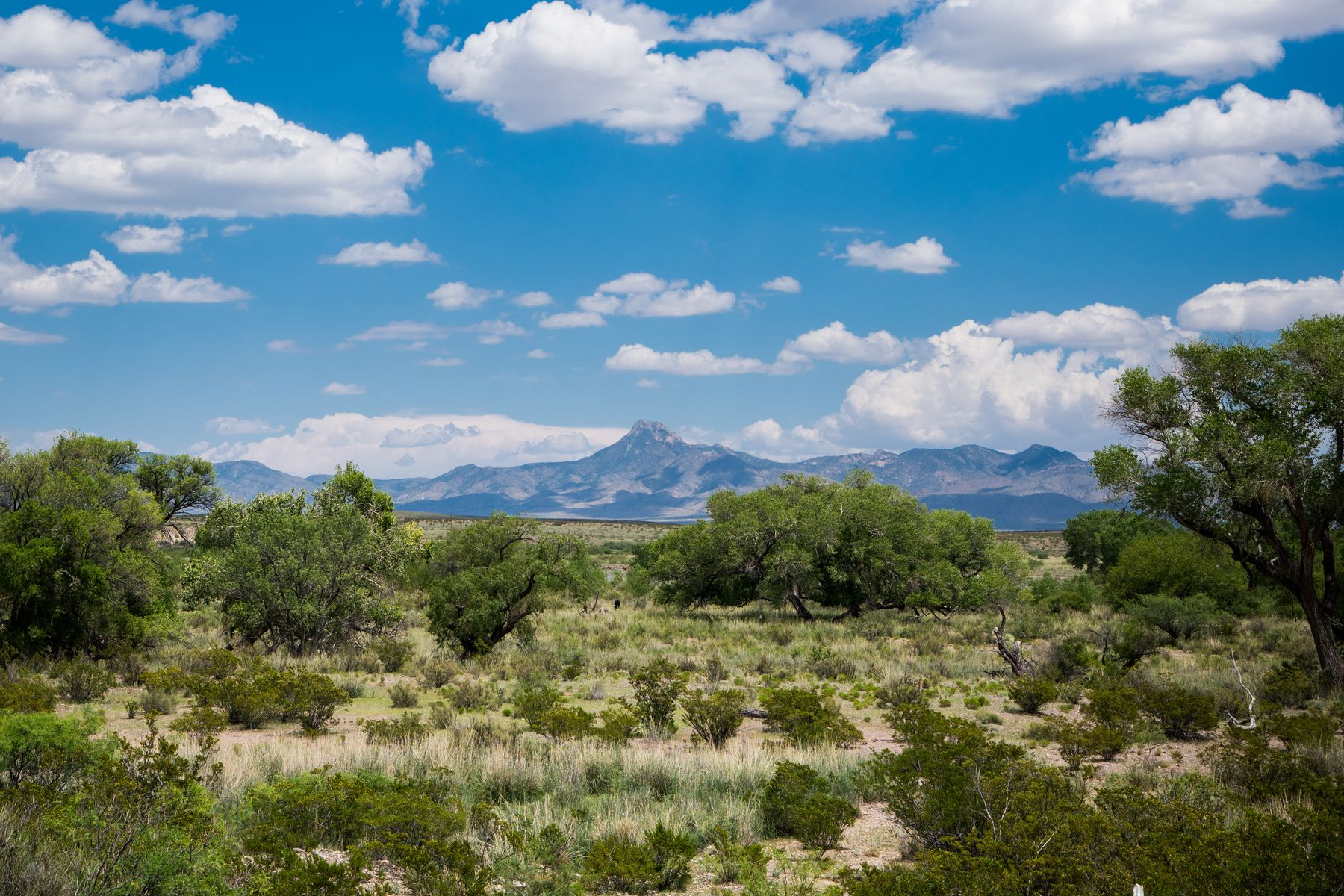 Ferme / Ranch / Plantation pour l Vente à Deming, Nouveau-Mexique 88030 États-Unis