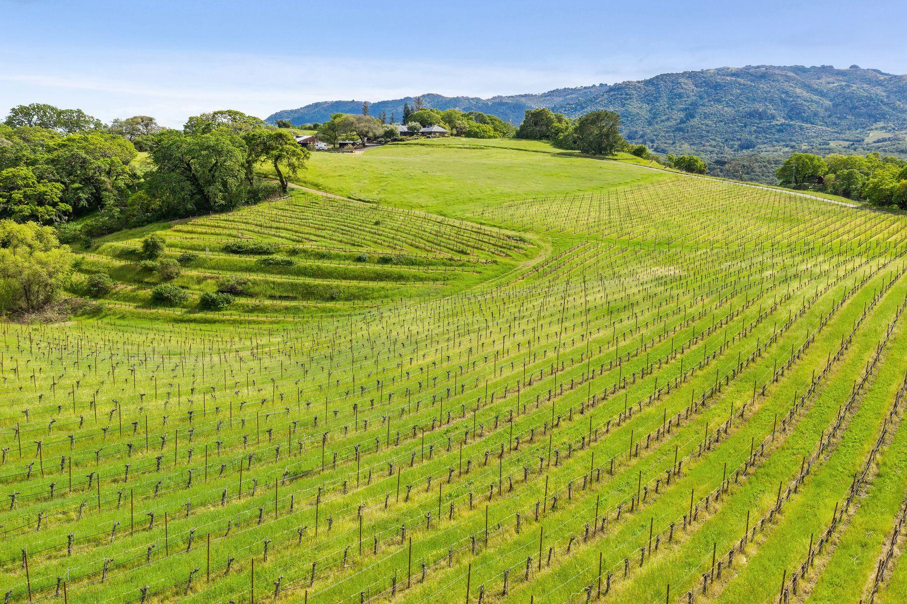 Vineyard Real Estate por un Venta en Legacy Vineyard View Estate Glen Ellen, California 95442 Estados Unidos