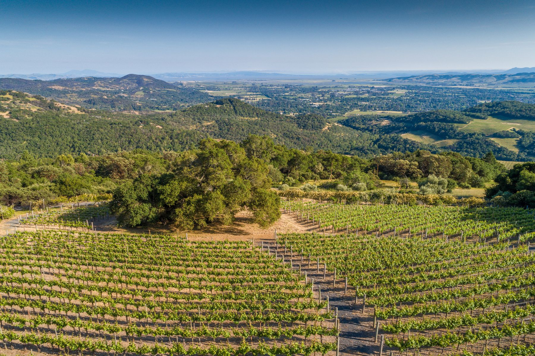 Land for Sale at 2046, 2050 & 2035 Hale Road 2050, 2046 & 2035 Hale Rd Sonoma, California 95476 United States