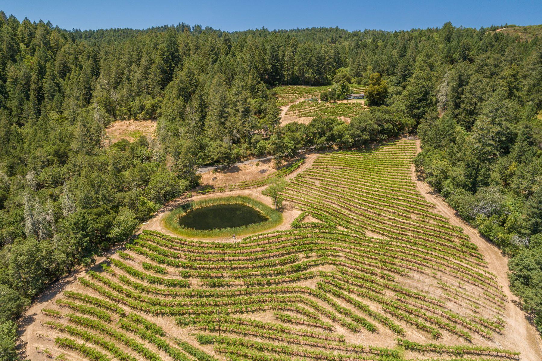土地,用地 为 销售 在 St. Helena Vineyard View 000 Spring Mountain Rd - 022-260-003 海伦娜, 加利福尼亚州 94574 美国