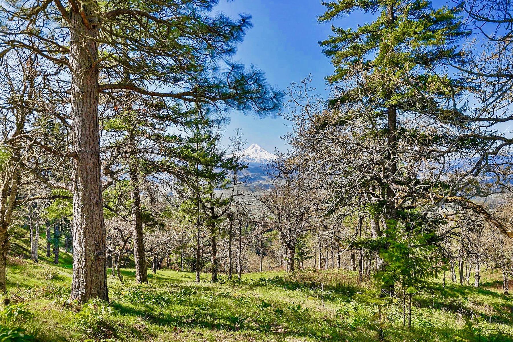 Land for Active at 1245 Hidden Oaks DR 12 Hood River, OR 97031 1245 Hidden Oaks DR 12 Hood River, Oregon 97031 United States