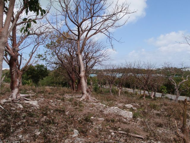 Additional photo for property listing at Elevated Harbour View Lot Russell Island, Spanish Wells, Eleuthera Bahamas