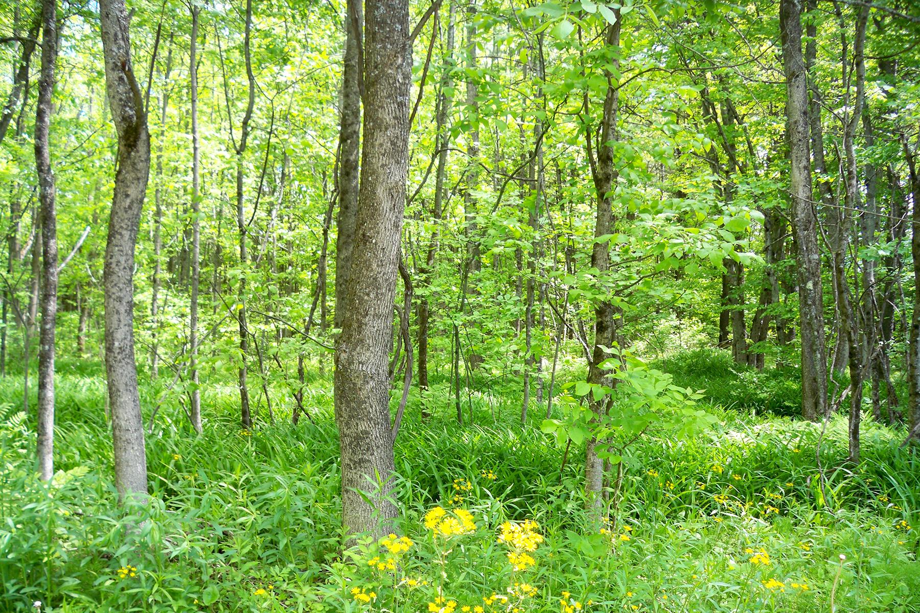 Đất đai vì Bán tại 94 Acre Sanctuary 0 Consaul Rd Galway, New York 12074 Hoa Kỳ