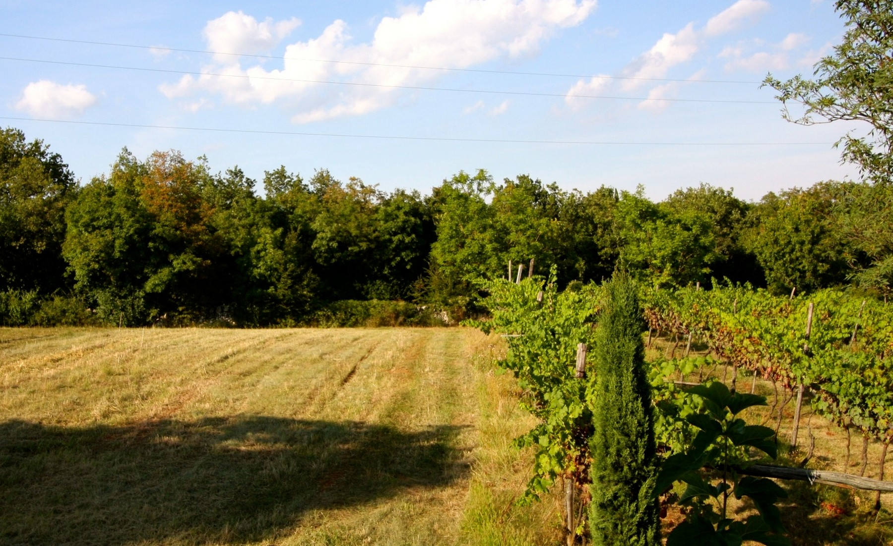Additional photo for property listing at Own your own Italian organic winery Via Cavallo San Germano Dei Berici, Vicenza 36040 Italien