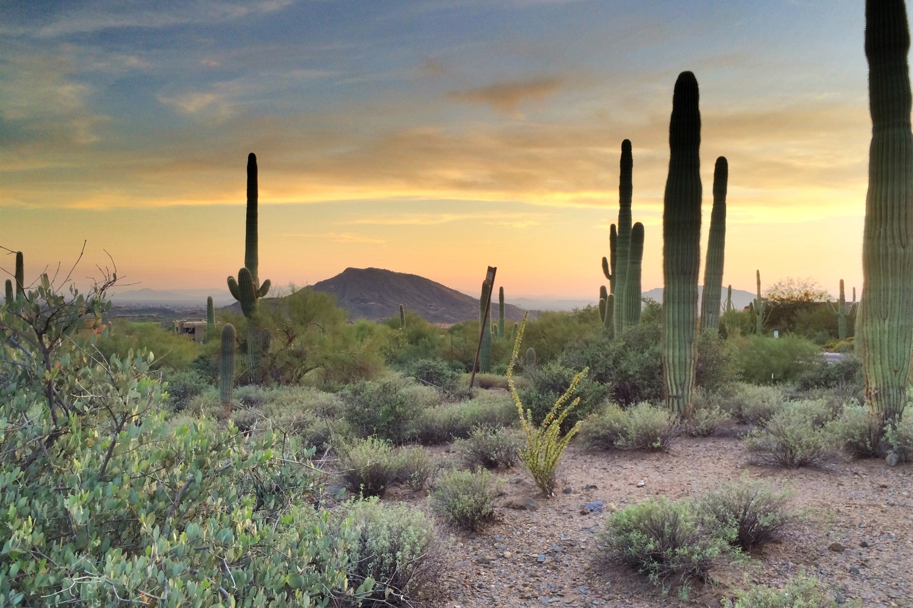 Arazi için Satış at Beautiful Views from this 1+ Acre Desert Mountain Saguaro Forest Custom Lot 41819 N Saguaro Forest Dr #105 Scottsdale, Arizona 85262 Amerika Birleşik Devletleri