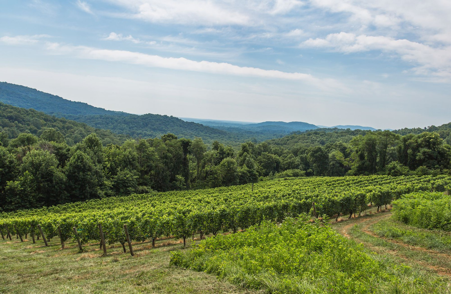 Additional photo for property listing at Chester Gap Cellars 4615 Remount Rd Front Royal, Virginia 22630 Stati Uniti