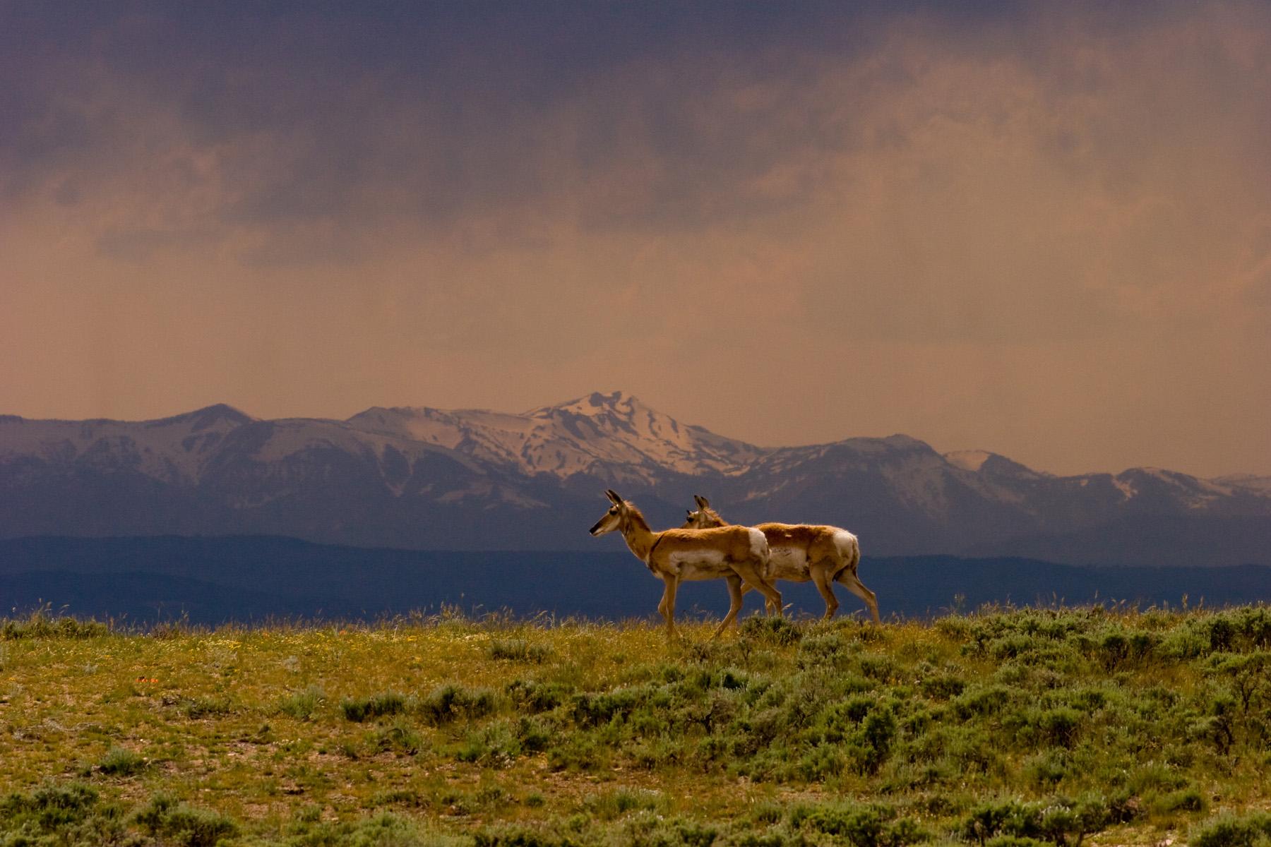 Hacienda / Granja / Rancho / Plantación por un Venta en Bar Cross Ranch 51 New Fork-Willow Creek Rd Cora, Wyoming 82925 Estados Unidos