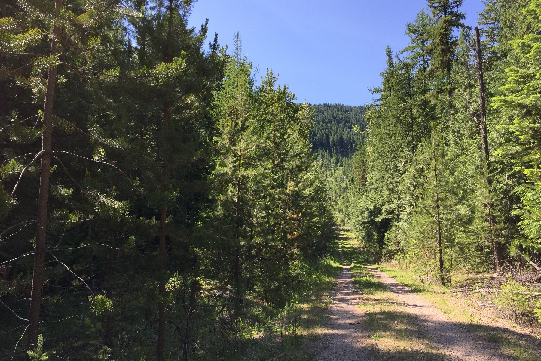 Land for Sale at Talache Rd 5 Timber Acres 2928 Talache Rd. Sagle, Idaho 83860 United States