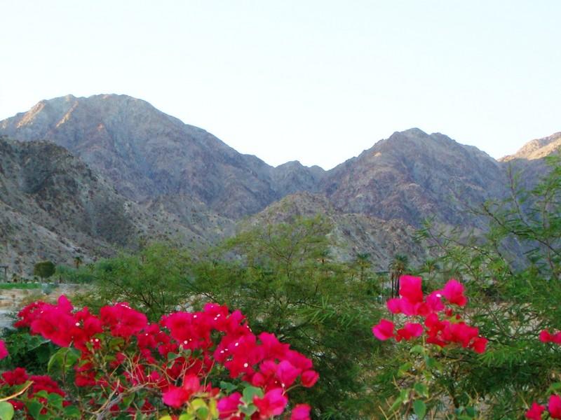 Terrain pour l Vente à 79640 N Tom Fazio Lane La Quinta, Californie 92253 États-Unis
