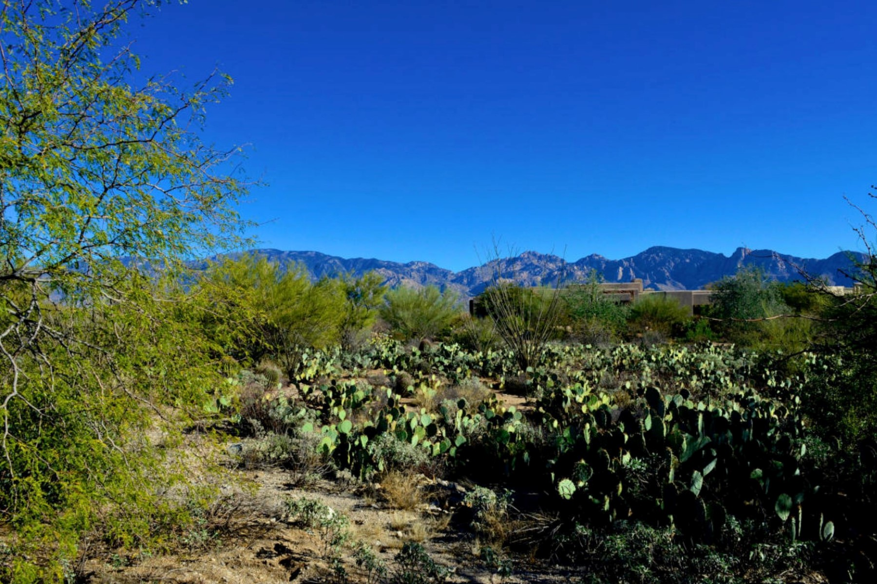 Land for Sale at Large Corner Elevated Panoramic Homesite With Mountain & Sunset Views 14211 N Giant Saguaro Place #24 Oro Valley, Arizona 85755 United States