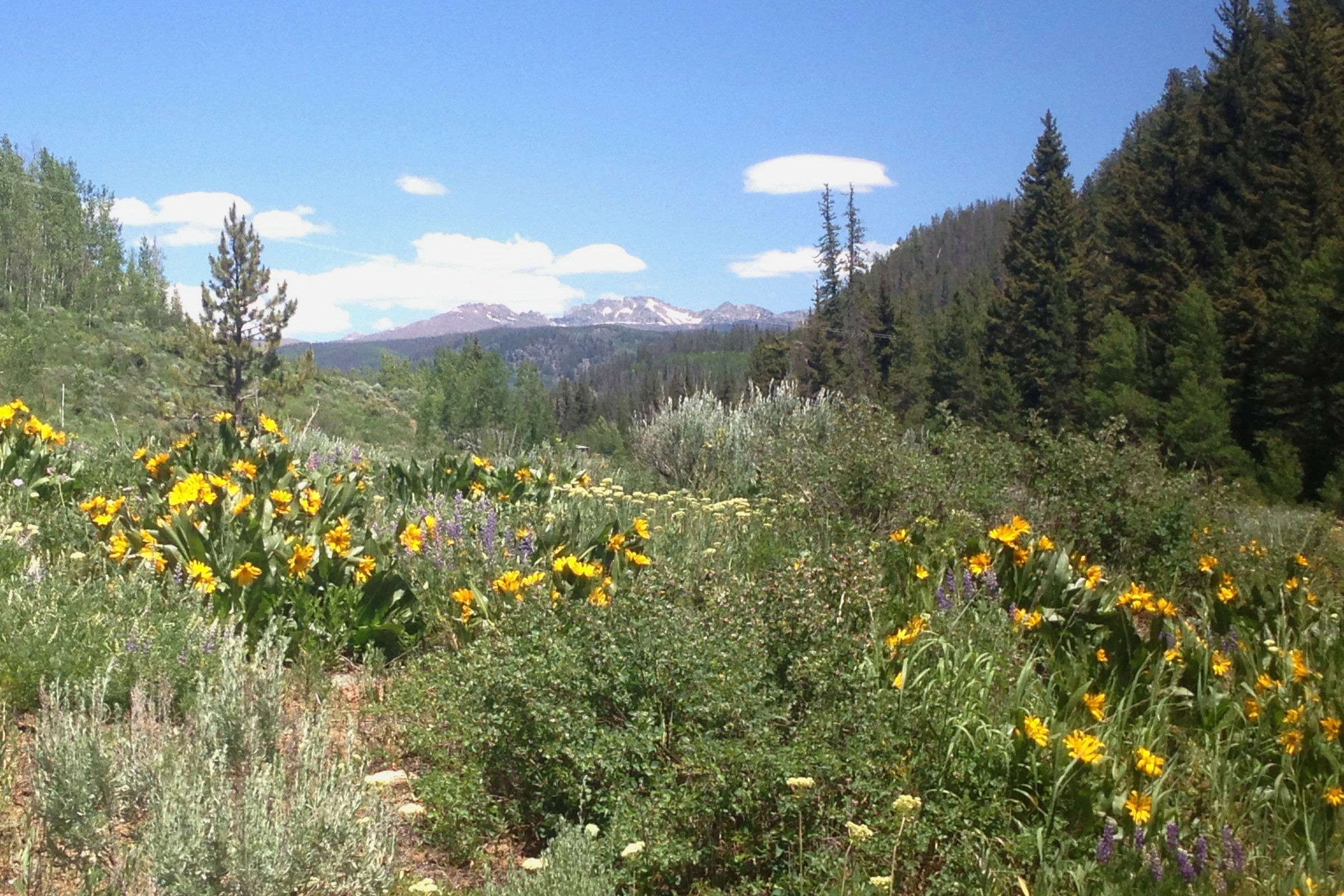 Land for Sale at Seed House Ranch 56285 Zirkel View Lane Clark, Colorado, 80428 United States