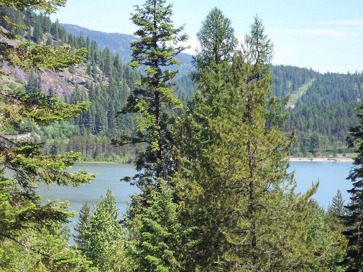 Land for Sale at Community watefront at Sunny Shores Buck Ridge Lot 3 Sagle, Idaho 83860 United States