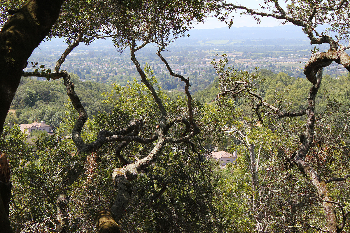 Land for Sale at 3716 Skyfarm Drive, Lot 9A Santa Rosa, California 95403 United States