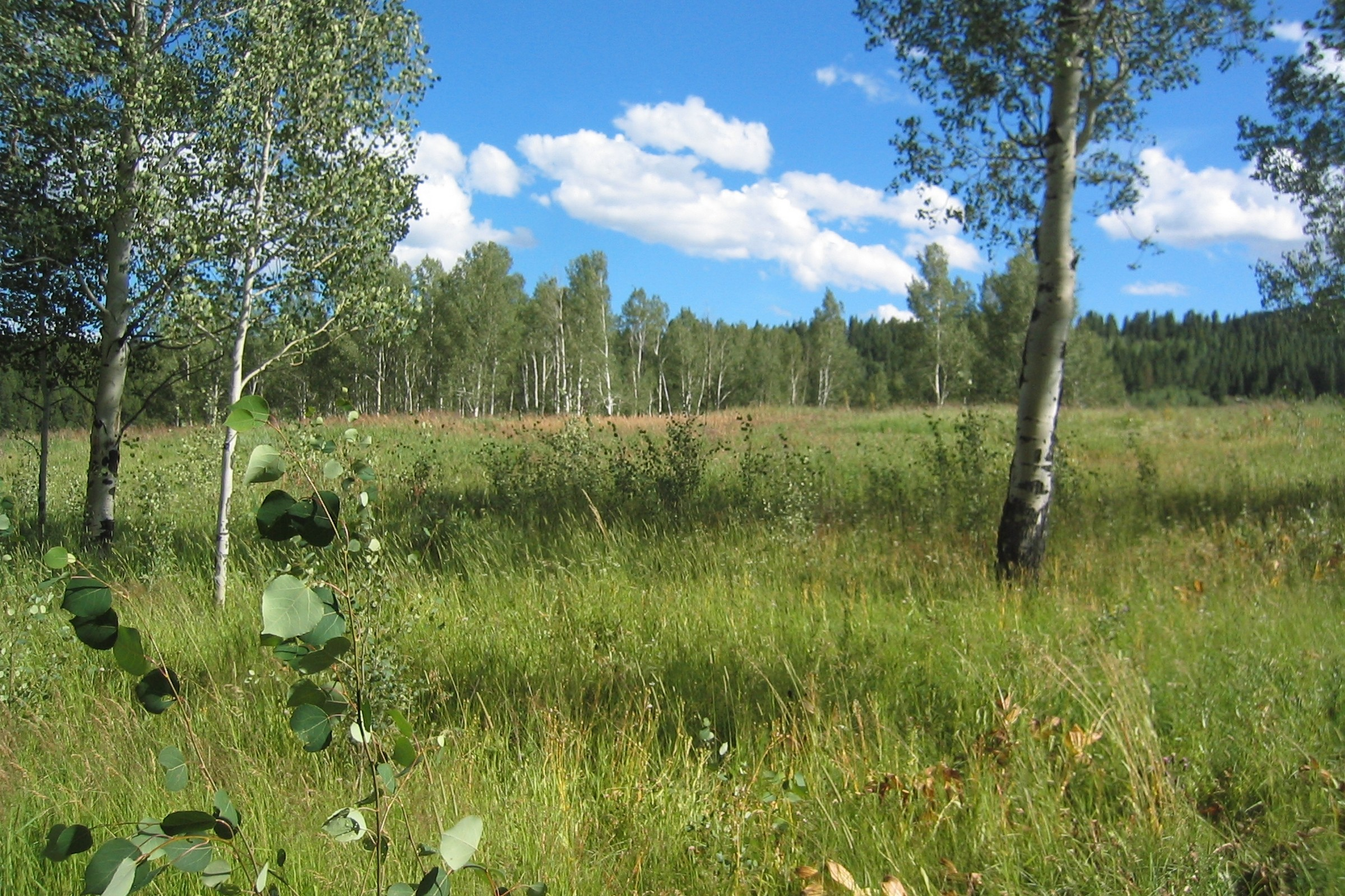 Land for Sale at Buy For The Future 20281 King Bolt Trl Oak Creek, Colorado 80467 United States