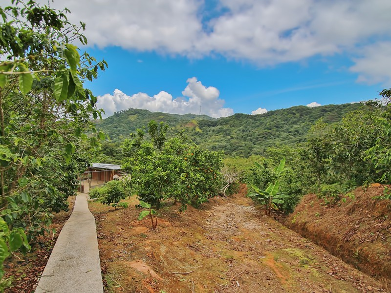 Additional photo for property listing at Hacienda Las Nubes  Adjuntas, Puerto Rico 00601 Porto Rico