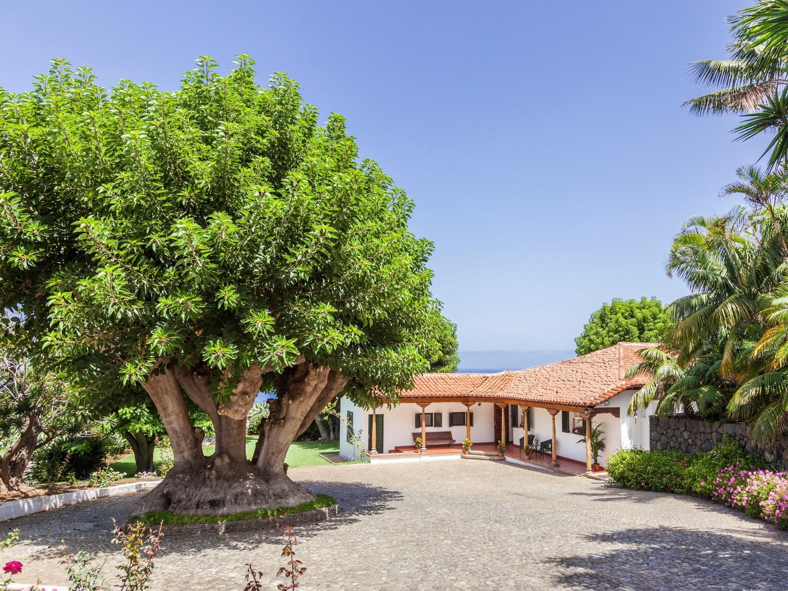 Ферма / ранчо / плантация для того Продажа на Las cuevas La Laguna, Tenerife Canary Islands, 38270 Испания