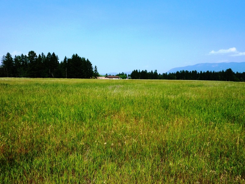 Terreno para Venda às Glacier Ranch 187 Whispering Meadows Trail Lot 118 Kalispell, Montana 59901 Estados Unidos