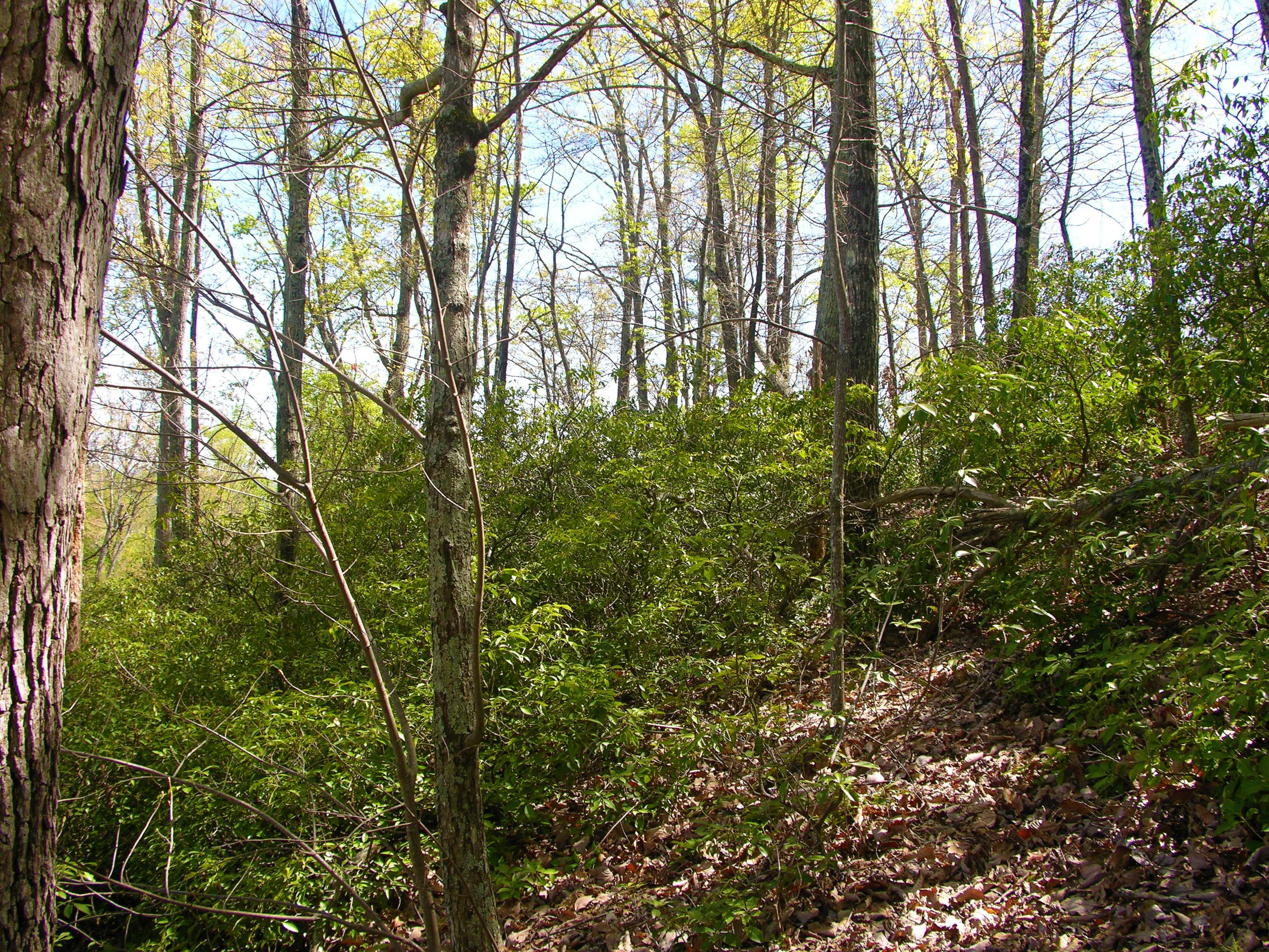 Land for Sale at #55 Bear Cliff Way Lake Lure, North Carolina, 28746 United States