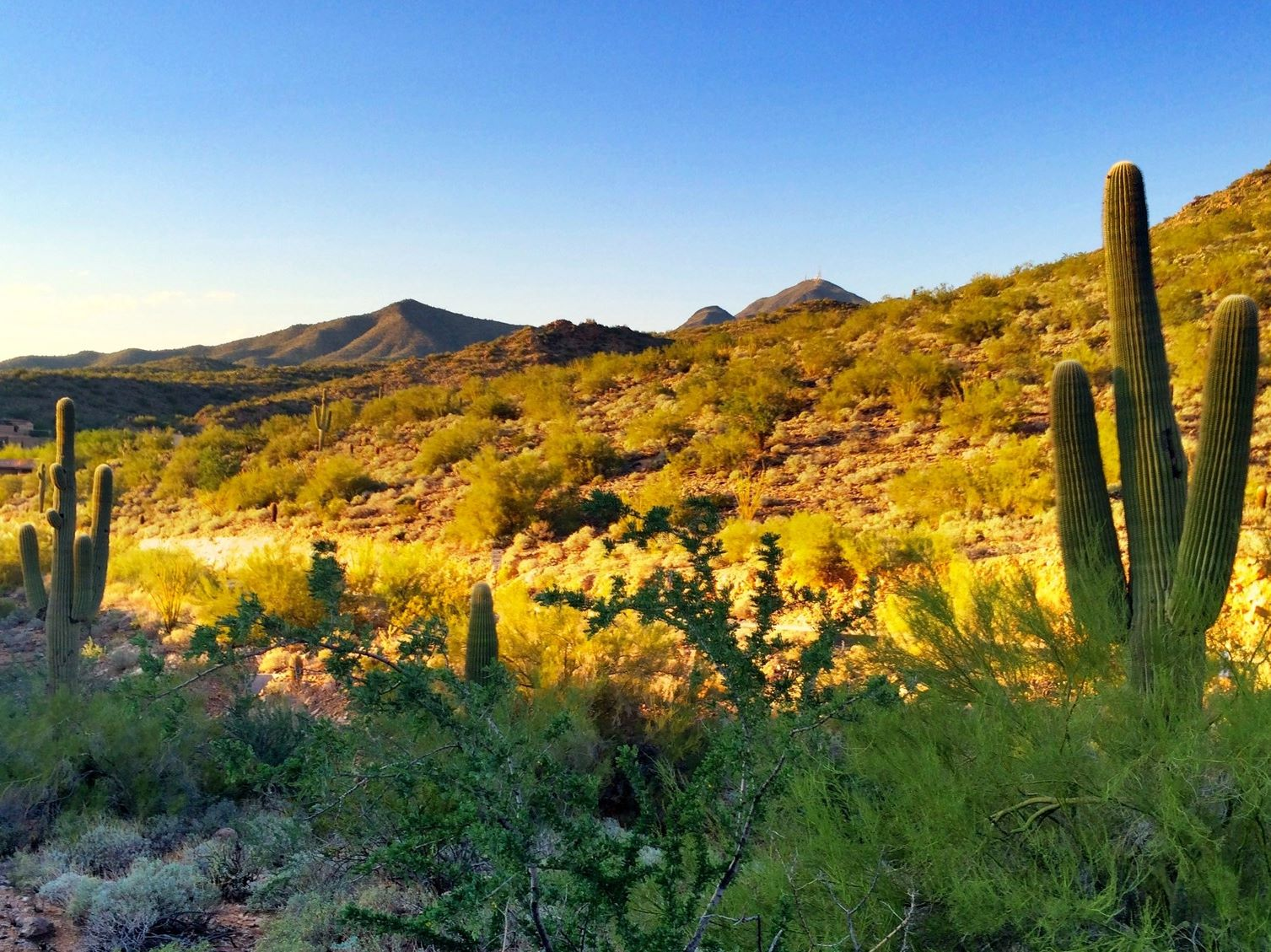 Land for Sale at Private 1.17 Acre Homesite In Guard-Gated Scottsdale Mountain 13155 E Larkspur Drive #9 Scottsdale, Arizona 85259 United States